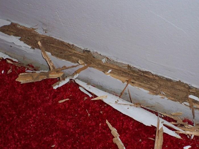 اضرار العتة على الخشب والأرضيات