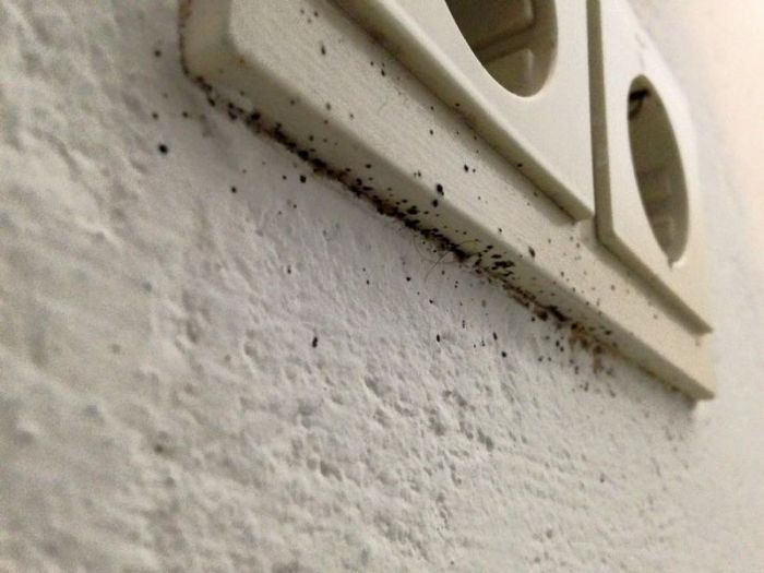 مكافحة حشرات بجده