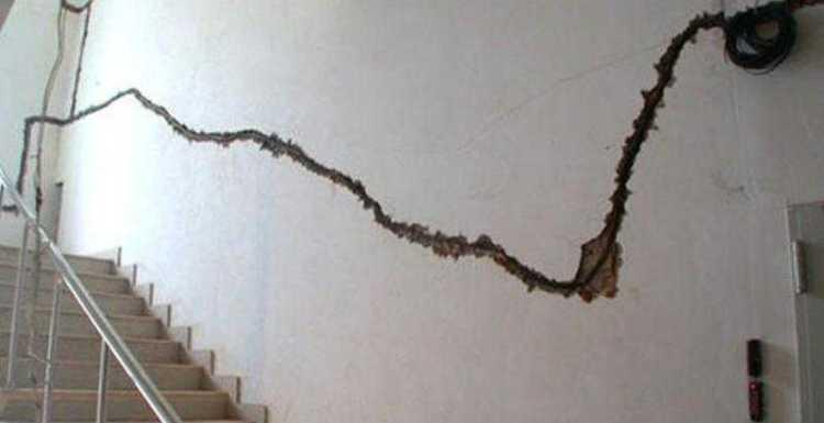 كوارث النمل الأبيض فى المنزل