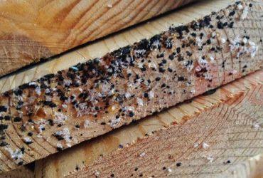 شركة مكافحة حشرات بجدة و أسباب ظهور بق الفراش