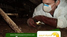 مكافحة النمل الابيض قبل البناء بجدة