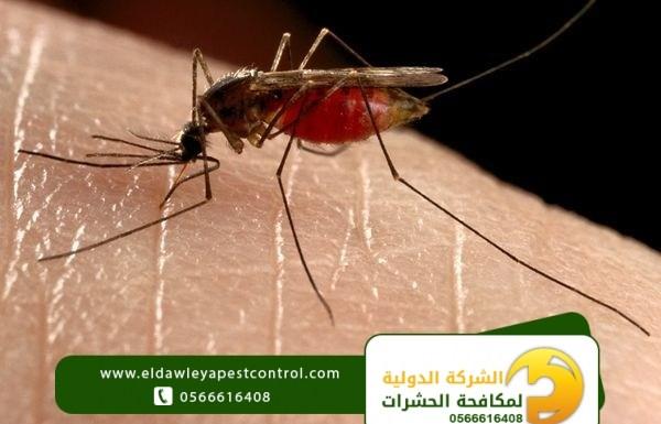 طرق التخلص من البعوض بدون مبيدات