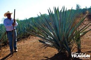 Guía Gastronómica Sabores de Tequila