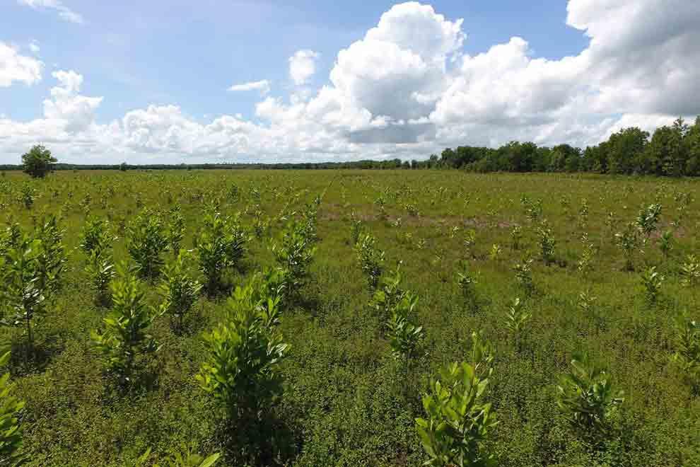 foto biomasa 2