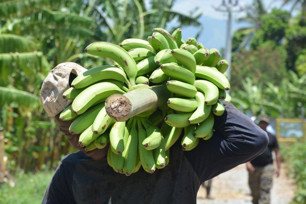 azua prduccion agricola