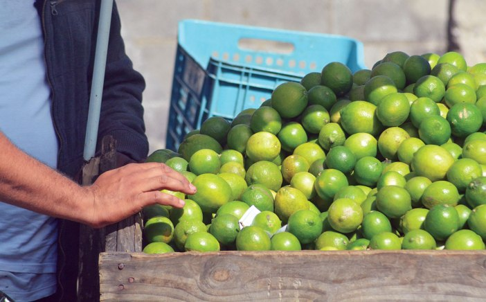 exportaciones limon agrio
