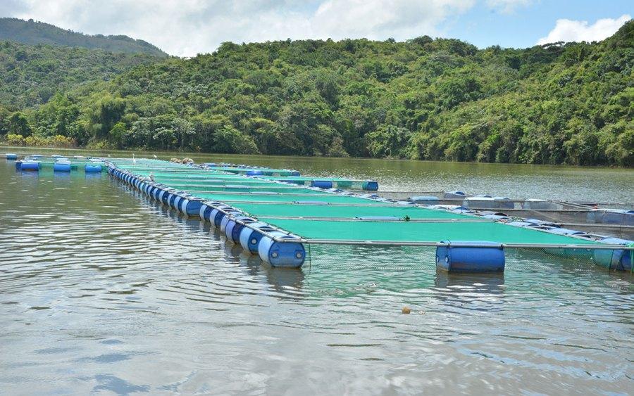 La piscicultura atractivo ecotur stico de cotu for Jaulas flotantes para piscicultura