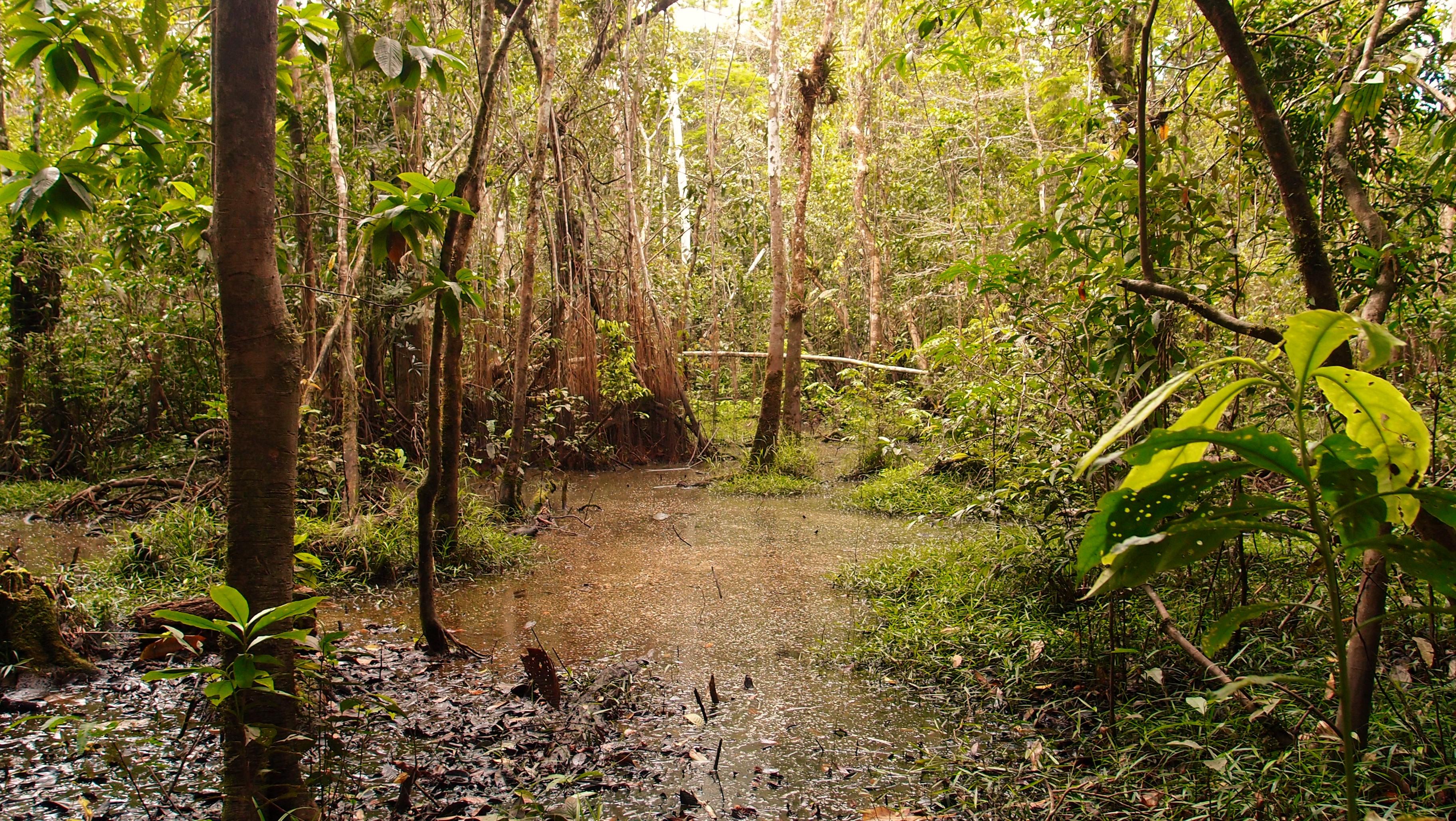 Amazonie, enclave primitive majestueuse