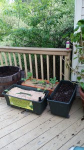 earth eggplant