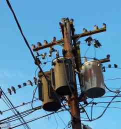 everyone is online funny electrical birds [ 2048 x 1152 Pixel ]