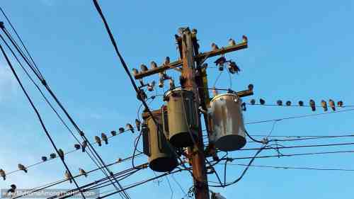 small resolution of everyone is online funny electrical birds