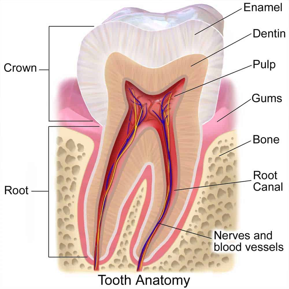 hight resolution of causes of dental abscesses