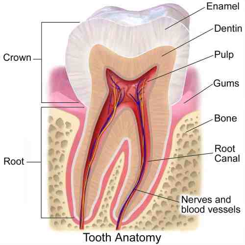 small resolution of causes of dental abscesses