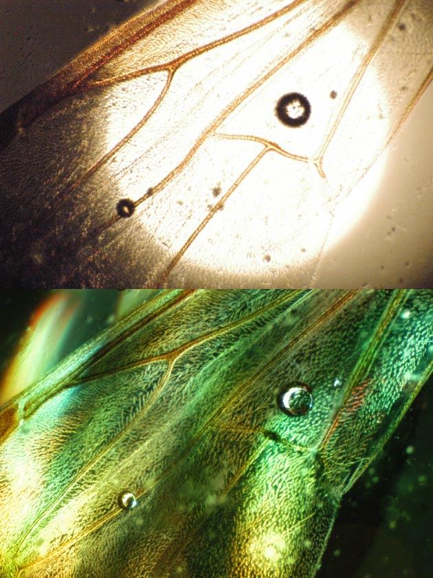 Oldfield Microscope