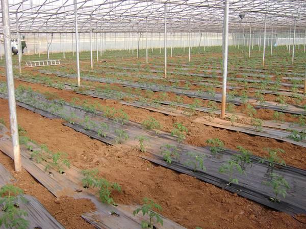 Εξι εκατομμύρια σε αγροτικές επενδύσεις στην Τριφυλία