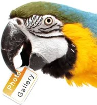 parrot photo gallery elegant painting