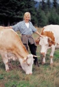 Elektrosmog beeinflusst Kühe