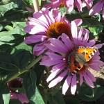 Blogs auf dem Naturtrip