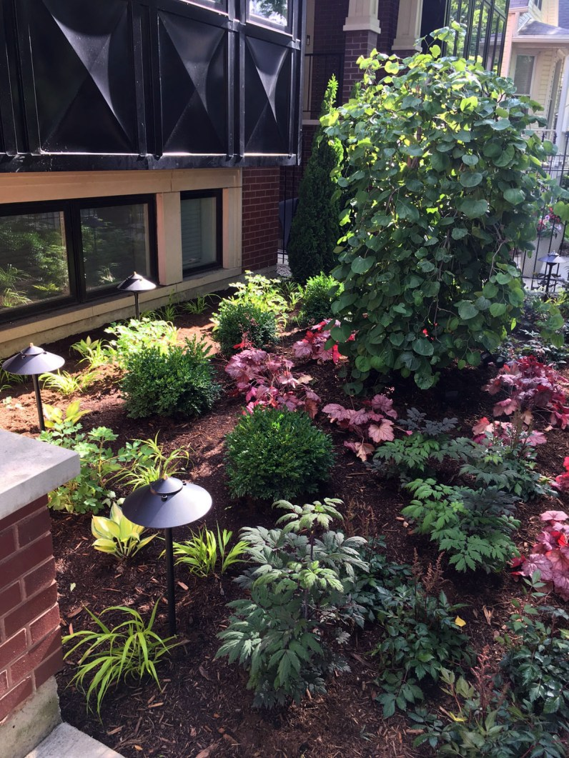 A variety of foliage colors and textures light up a shady garden.