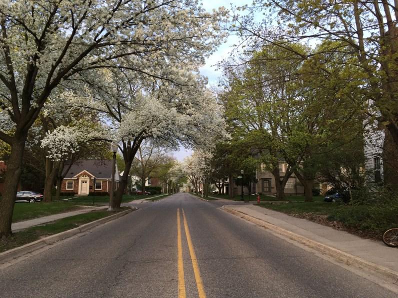 Pear trees are adaptable street trees.