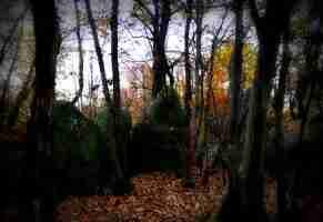 Il bosco segreto delle masche