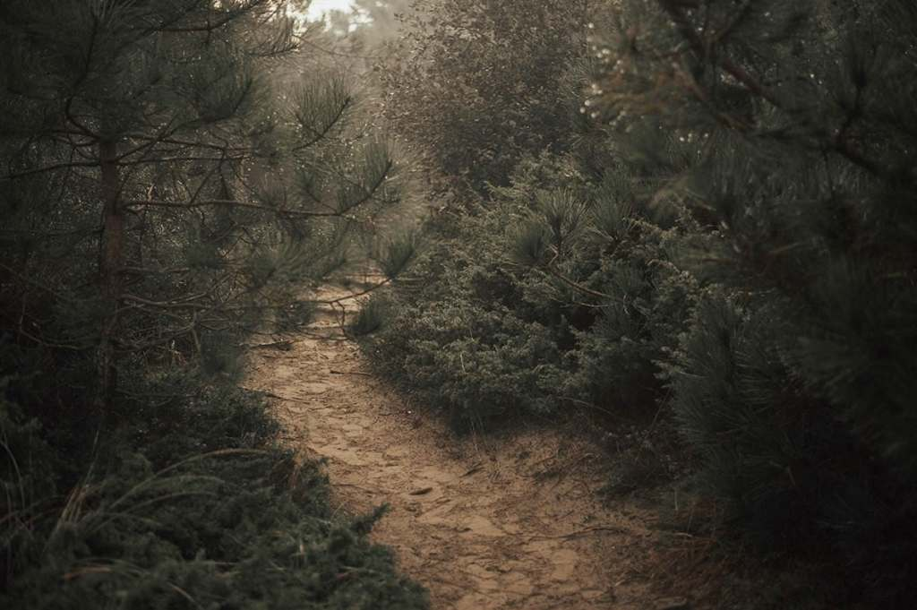a path in the forest
