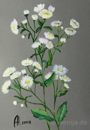 Schneefall der Blumen