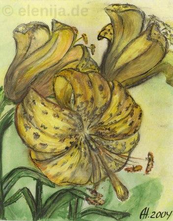 Tiger-Lilie, von Elenija