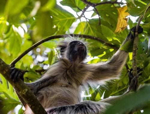 Zanzibar escursioni da fare