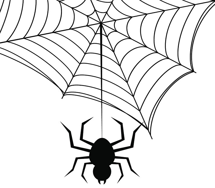 Arachnids Educational Resources K12 Learning, Life Science