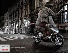 elephant_en_scooter.jpg