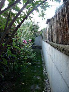 buddléia, Physocarpus , Osmanthus burkwoodii, Viburnum,