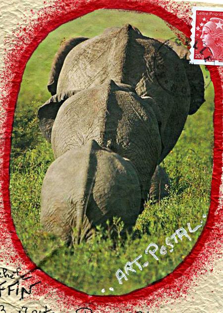 elephants 431