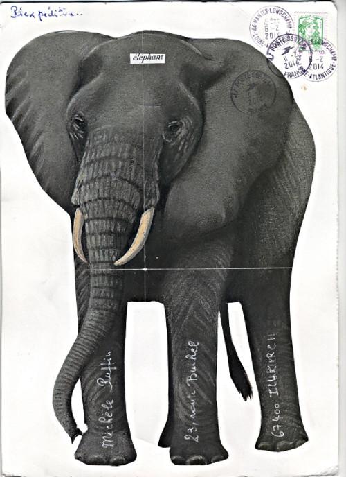 elephant_2014_01 (22)