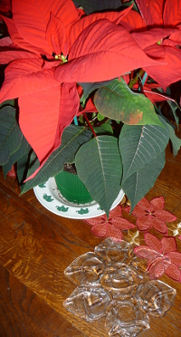 Poinsettia__©MR