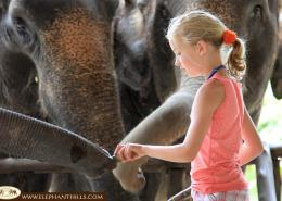 Especially our younger guests enjoy feeding the Asian Elephants at Elephant Hills Thailand