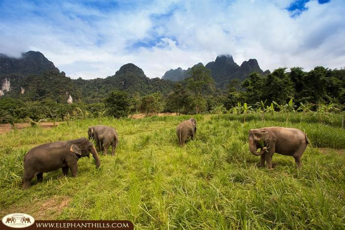 Free roaming to pick their own elephant food such as banagras