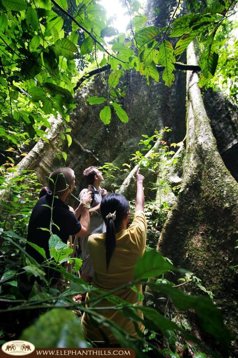 Guided tours to learn as much as possible about Southern Thailand's rainforest