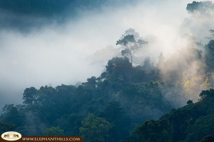 Rising mist above the rainforest trees