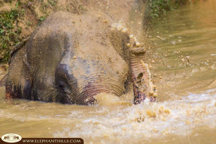 Elephant bath makes our elephants happy