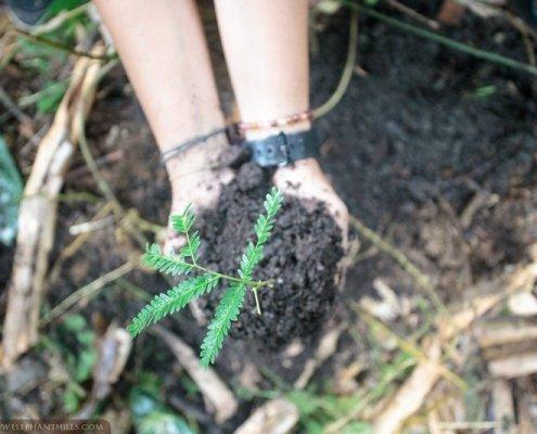 Elephant Hills - Tree-planting co2 offset