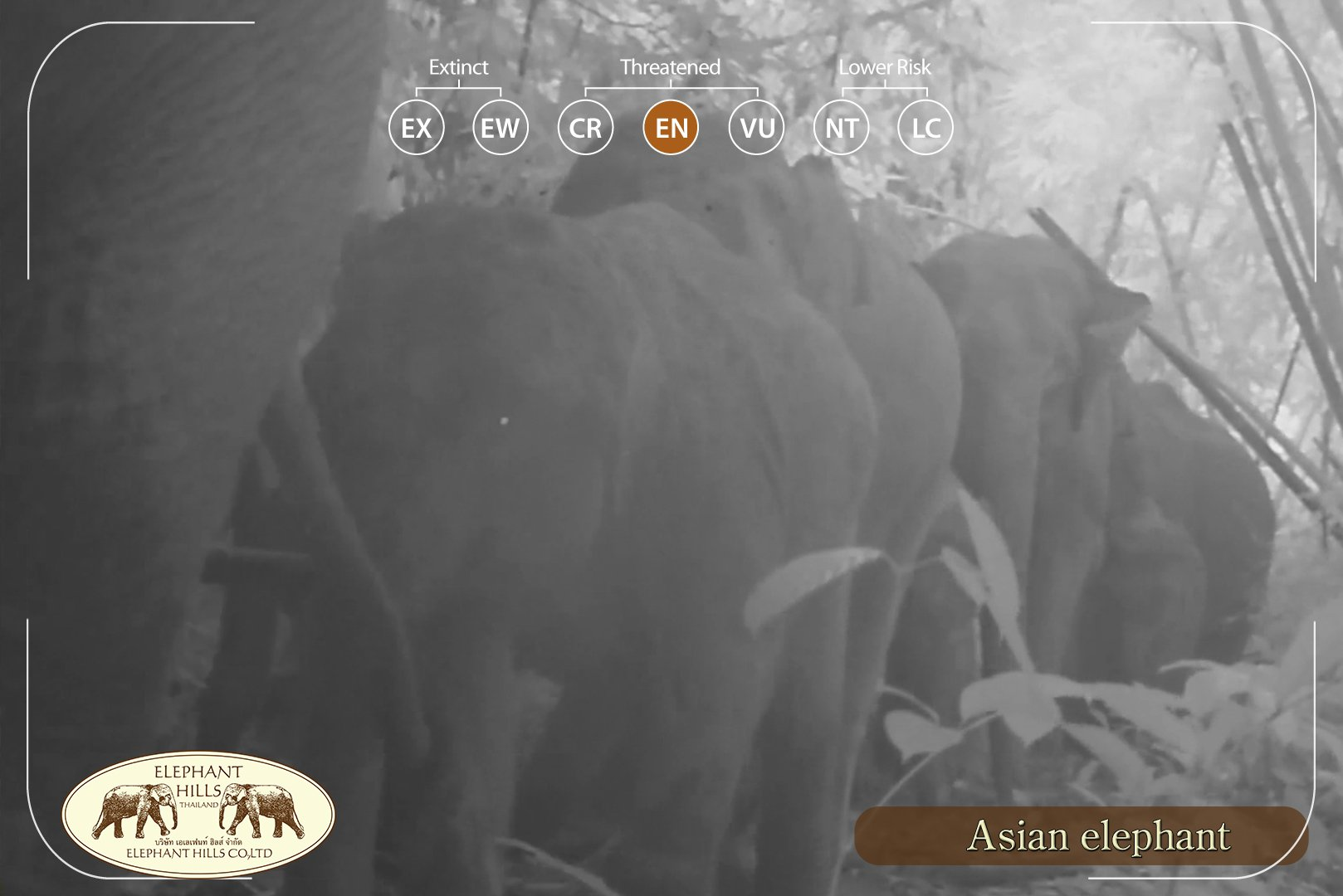 Elephant herd in Elephant Hills' camera of Wildlife Monitoring Project