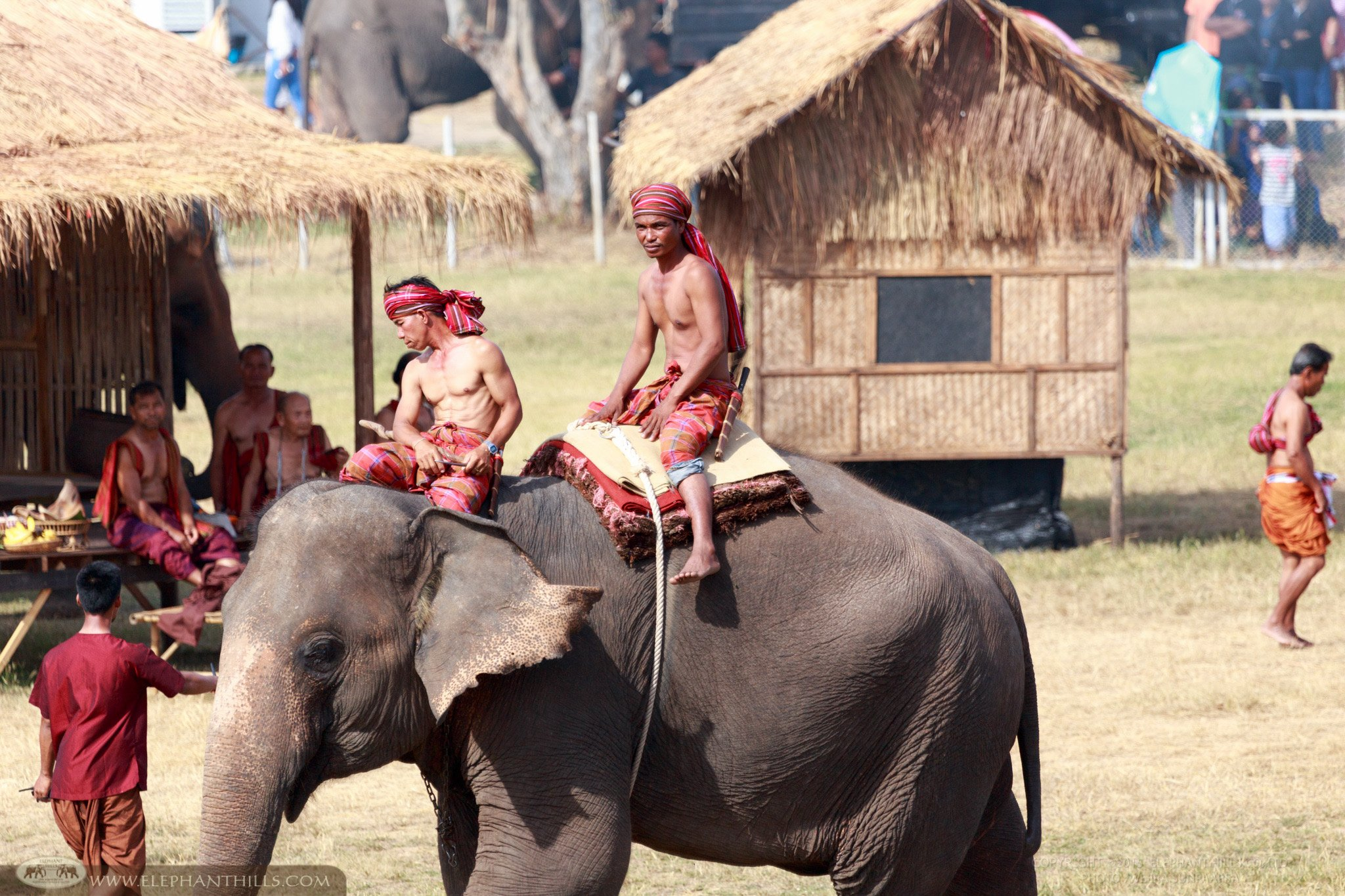 How people in the past lived with elephants in an Elephant show at Surin, Northeastern province in Thailand