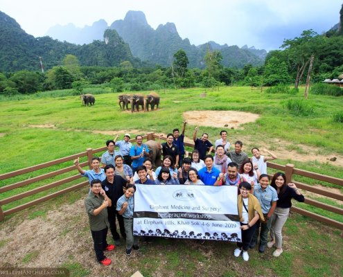 Elephant Medicine and Surgery - Workshop at Elephant Hills