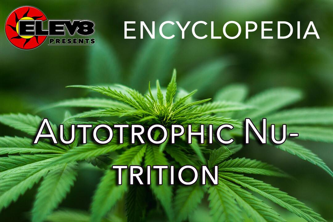 Autotrophic Nutrition Elev8 Presents