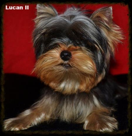 Lucan II