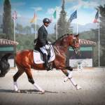 DRESSAGE COMPETITION / PRESENTATION OF HORSES FOR SALE
