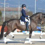 Une rentrée remarquable au CDI*** de Nice pour les chevaux MASSA