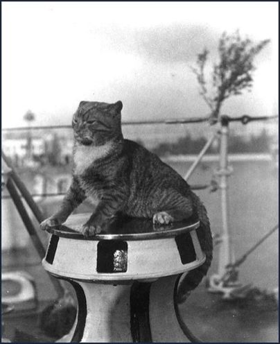 CatsAtSea15