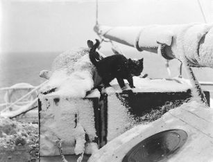 Cat on Steam Yacht 'Morning'